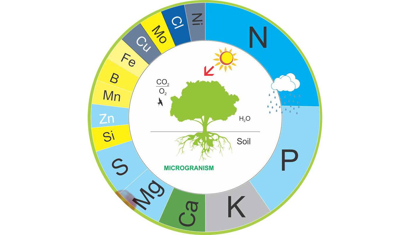 Crop Nutrition – EUROFA